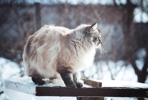 Fotos de cães e gatos que adoram o inverno