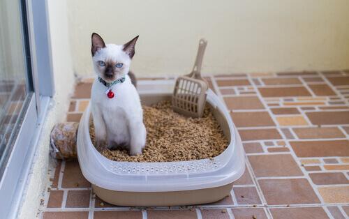 Por que o meu gato não usa a caixa de areia?