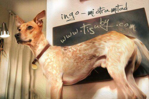 Cantora venezuelana cria uma bela canção para os cães