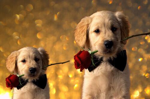 Seu amor adora cães? Dê de presente algum destes 5 livros no Dia dos Namorados