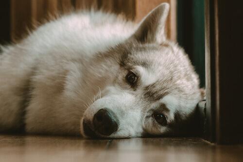 E se meu cachorro não consegue dormir à noite?