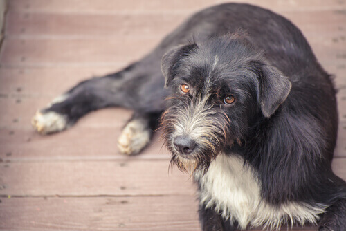 Croquetes contraceptivos para cães de rua