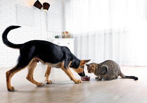 O que devemos fazer para não desequilibrar um cão ou um gato