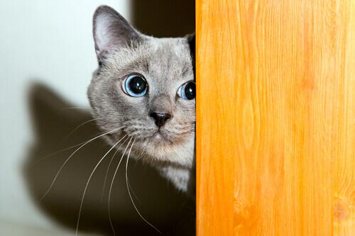 Os gatos também têm medo dos fogos de artifício?