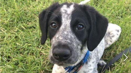 A triste história de Grizz, um cão de polícia