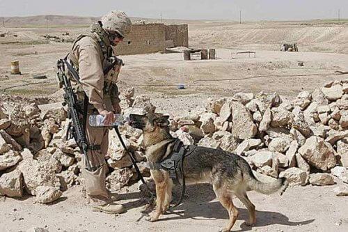Uma terna história de amizade na guerra do Afeganistão