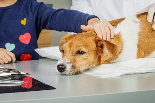 Vire técnico de intervenções assistidas por animais