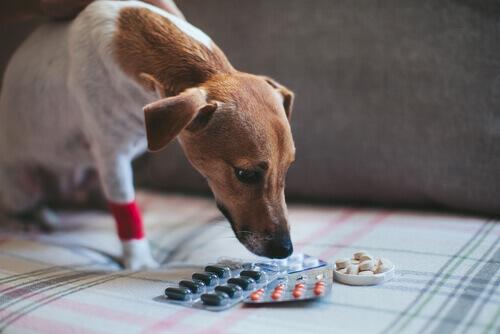 Podemos dar aspirina ou similares para os cachorros?