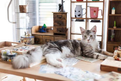 Cinco livros sobre gatos que você vai adorar