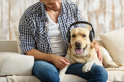 Segundo especialistas, os cães adoram rock