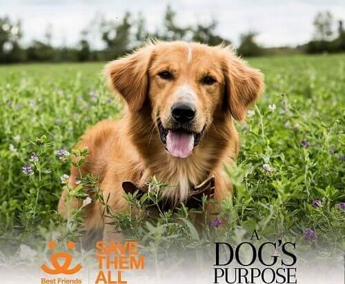 """Um """"não"""" à estreia do filme 'Quatro Vidas de um cachorro' por maus-tratos contra animais"""