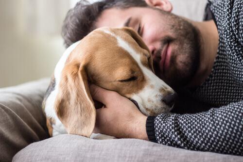 O cão é o melhor amigo do homem