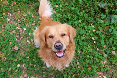 Como nossos cães se expressam?