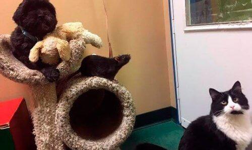Cachorro, gato e rato: 3 amigos inseparáveis