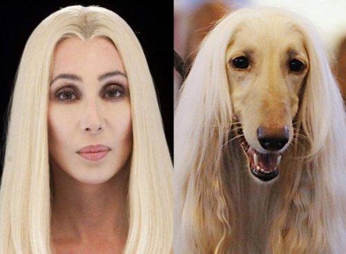 Os cães se parecem com seus donos