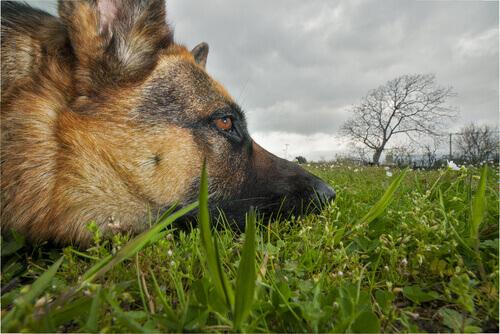 Plantas tóxicas para os cães