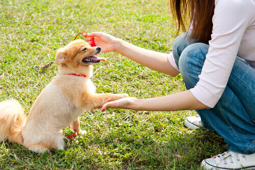 Como cumprimentar um cachorro pela primeira vez