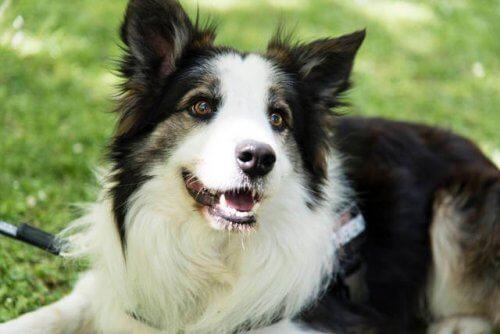 Este cãozinho salva a vida de outros cães detectando venenos em parques