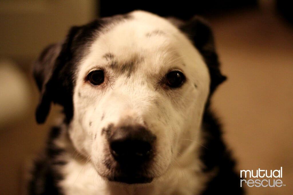 Como um cão salvou a vida de seu dono obeso