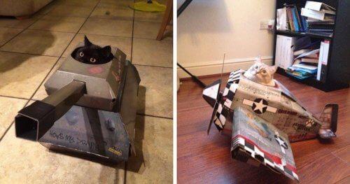 """""""Tanques de guerra"""" e """"aviões"""" para gatos"""