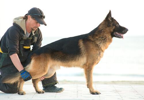 Terapia com cães abandonados para presidiários