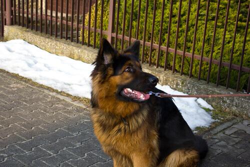 Evite que seu cão faça travessuras quando vocês estiverem passeando