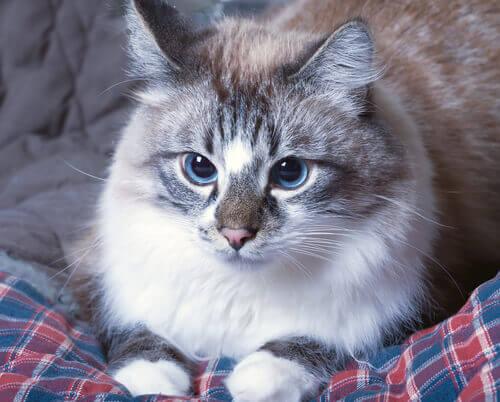 O que fazer quando os gatos vomitam