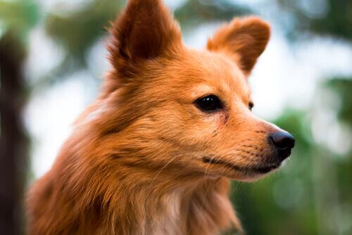 Os primeiros 6 signos do horóscopo canino
