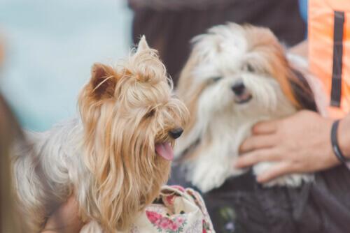 Como falar com seu animal de estimação