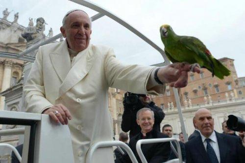 O Papa Francisco e os animais