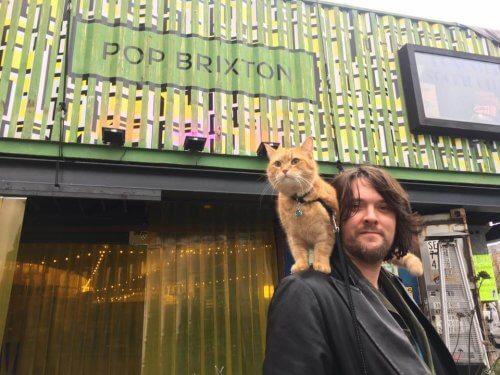 Bob, um gato de rua