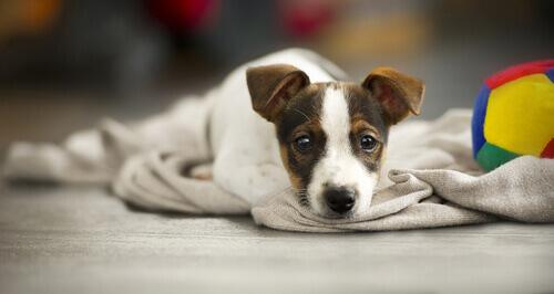 Como posso entender um cão se algo estiver errado
