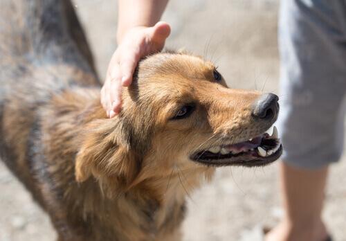 Onde você pode adotar um cão na sua cidade?