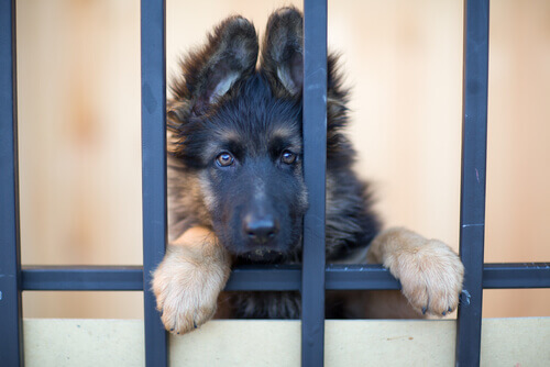 Cachorro olhando pela grade