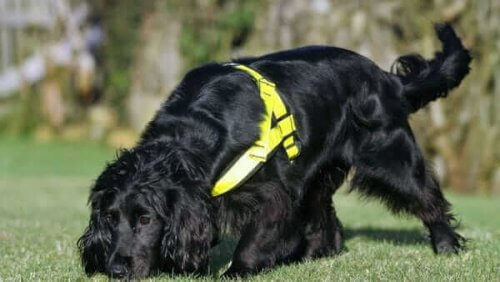 Molly, uma cadelinha treinada para resgatar gatos
