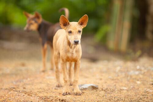 Homenagem aos cães abandonados no México