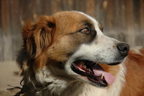 Como tratar as náuseas do meu cachorro