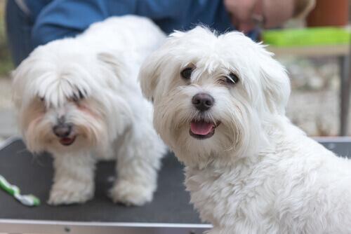 Três dicas essenciais para cuidar do seu cão