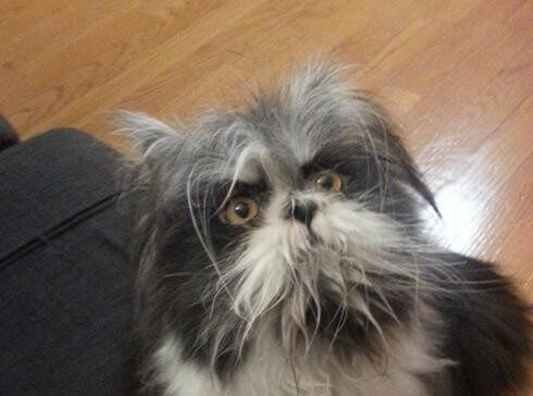 Um curioso animal do Twitter: é um cão ou um gato?