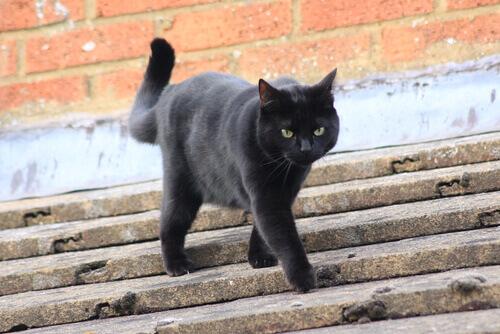 5 cuidados especiais com os gato