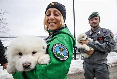 Três filhotes são resgatados após avalanche na Itália