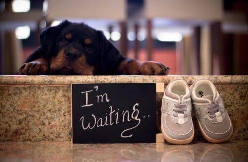 A resposta de futuros pais para a sugestão de se livrarem de seus cães