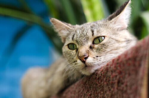 Os gatos podem se curar com o próprio ronronar