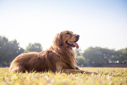 Como saber se o seu cão está bem de saúde observando as suas fezes?