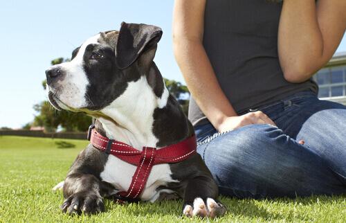 Ter um cão melhora a sua saúde emocional e física