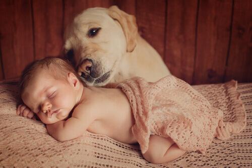 6 conselhos sobre como preparar o seu cachorro para a chegada de um bebê