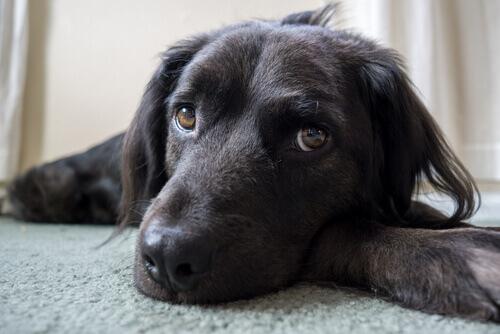 6 coisas que você acha que seu cão gosta, mas pelo contrário