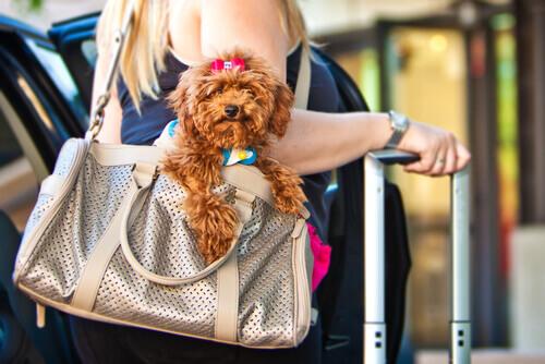 Você costuma viajar com seu cachorro? Então não se esqueça de baixar estes apps!