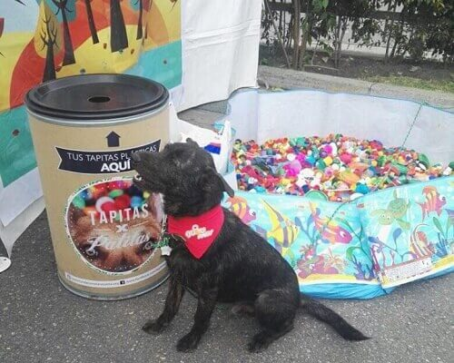 Recicle e ajude os animais!