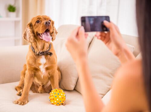 Você sabe tudo sobre o seu cão? Estes aplicativos poderão te ajudar